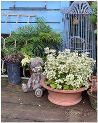 プリムラ・ウィンティーをもう少しだけ楽しみたくて♡ - 小さな庭 2