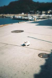 島の猫 - Blue Planet Cafe  青い地球を散歩する