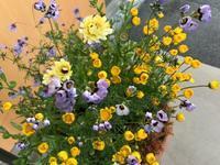 0428 container garden - Healing Garden  ー草庭ー