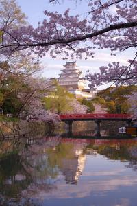 桜のお城散策(2020/4/5)其の③ - 南の気ままな写真日記