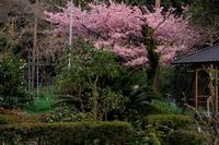 春の花咲く恵心院 - 花景色-K.W.C. PhotoBlog