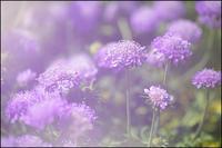 春彩 - 薫の時の記憶
