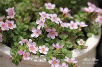 庭の花々 - Flores*Flores