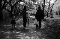 春は爛漫だが・・・ - Yoshi-A の写真の楽しみ