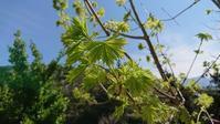 木々の芽吹き - 今から・花