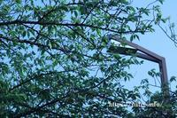 見逃せない青い空と美しいみどりの木。 - 一場の写真 / 足立区リフォーム館・頑張る会社ブログ