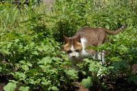 コロナ禍のライフログ #1 ー A life log under an emergency declaration at a remote local city #1 - COMPLEX CAT