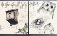 ドライグレンジのセイヨウトチノキパート4:4月、巣づくり、つぼみがほころぶ - ブルーベルの森-ブログ-英国のハンドメイド陶器と雑貨の通販