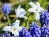 春の花 3 - ty4834 四季の写真Ⅱ
