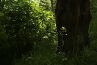 青葉の候 - Yoshi-A の写真の楽しみ