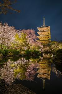 2020京都桜~東寺ライトアップ - 鏡花水月