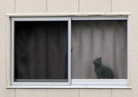 窓猫★見つめ合う恋❤ - 月夜飛行船2