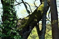 自生する木 - SOLiD「無垢材セレクトカタログ」/ 材木店・製材所 新発田屋(シバタヤ)