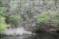 春の湿地 - 薫の時の記憶