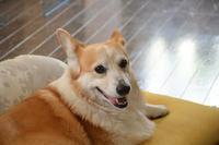 先日のお散歩 - むーちゃんパパのブログ4