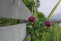 リシュリューと撮り納め - お庭のおと
