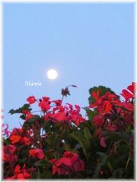 お月さまがでてるよ・・・ - おだやかに たのしく Que Sera Sera