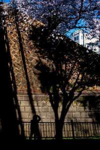 我が街散策(3) - 写真の散歩道
