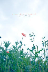 Flower Photograph #20 - psyuxe*旅とアトリエのあいだ