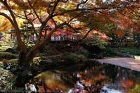 小石川後楽園 紅葉 - photograph3