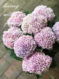 『M レボリューション』ピンク‼︎ -  Flower and cafe 花空間 ivory (アイボリー)