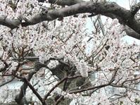 萬年さんちの梅の花 - 小さなお庭のある家3