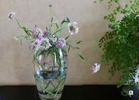 「お家にお花を飾る」草花「イベリス」をいける - Bouquets_ryoko