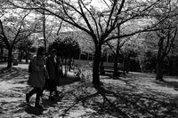 今日から日常というわけではないが・・・ - Yoshi-A の写真の楽しみ