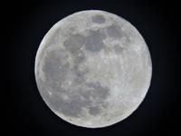 今夜は満月! - 写真撮り隊の今日の一枚2