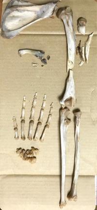 今年のゴールデンウィークは【注:骨画】 - 創り手、覚え書き。