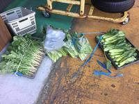 行先のなくなった野菜。 - 中野自動車商会 中野忠浩のブログ(燕市)0120-559-154