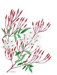 ジャスミンが咲きだしました。 - がちゃぴん秀子の日記