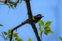 昔...縁日で見た「小鳥の占い」が懐かしい - なんでもブログ2