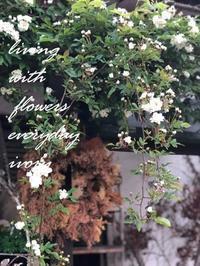 モッコウ薔薇 -  Flower and cafe 花空間 ivory (アイボリー)
