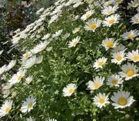庭の花が咲き🌹花たちよ💐ありがとう - 楽らく日記