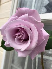 日本ローズライフコーディネーター協会企画「2020年春私のバラ」もぜひご覧下さい。 - バラとハーブのある暮らし Salon de Roses