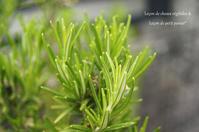 春の庭の薬草たち。 - Café chez soi~シンプルなおうちおやつ&菜穀ごはん