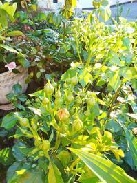 トシ取ったなと感じたこと - 小庭の園芸日記