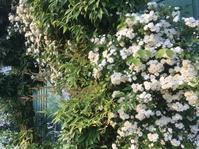 庭仕事 - 花の自由旋律