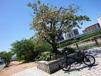 木陰で休憩 - EVOLUTION