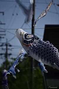鯉のぼり - 今日の空+α2