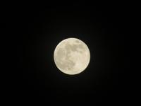 昨夜の満月は「フラワームーン」でした。 - 京都の骨董&ギャラリー「幾一里のブログ」