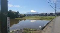 逆さ富士と藤 - 猫屋の今日も園芸日和〜ギボウシ達の庭〜