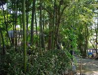 円福寺竹林と竹の子 - ひのきよ