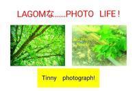 Fresh   green   season ❗ - LAGOMな……PHOTO   LIFE !