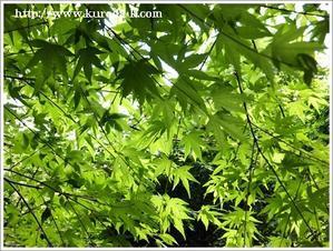 『新緑の緑色に癒されて・・・!』 - 黒田工務店日記