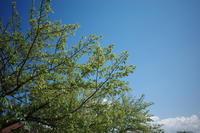 新緑の五月 - 司法書士 行政書士の青空さんぽ
