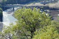 新緑前景、SLがいる風景 - 蒸気屋が贈る日々の写真-exciteVer