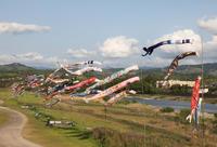 五條吉野川鯉のぼり - 魅せられて大和路