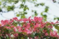 春の花 8 - ty4834 四季の写真Ⅱ